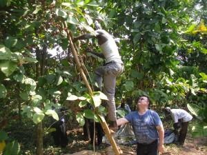 coffee_farm3_20160226