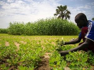 farming_east_africa